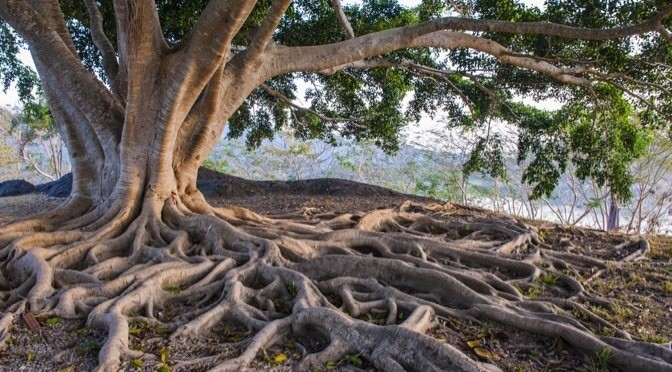 Deep Roots…
